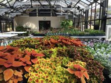 interior-greenhouse-picture-from-the-post
